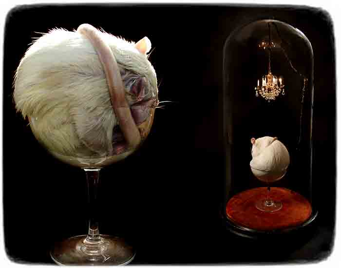 Polly_Morgan_taxidermy_1