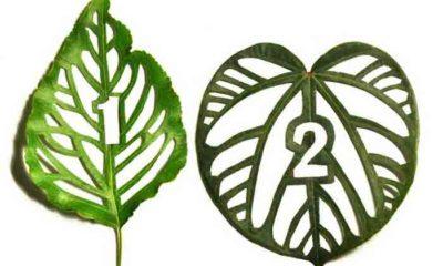 Арт-проект Cut Leaf