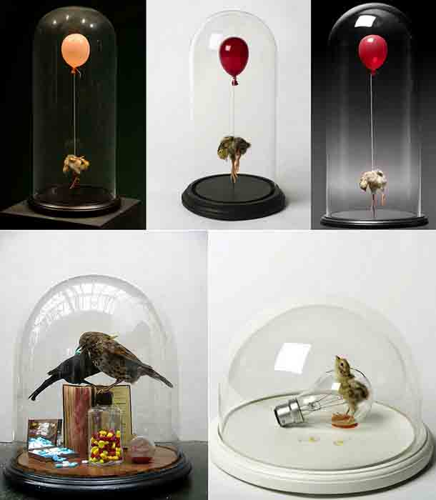 Polly_Morgan_taxidermy_4