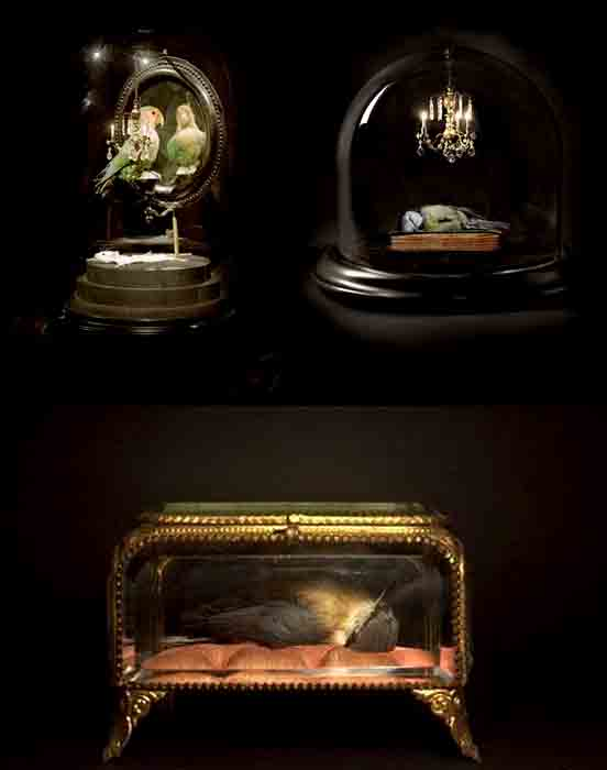 Polly_Morgan_taxidermy_6